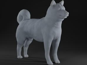Dog (Akita)