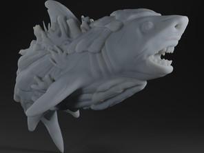 Shell Shark
